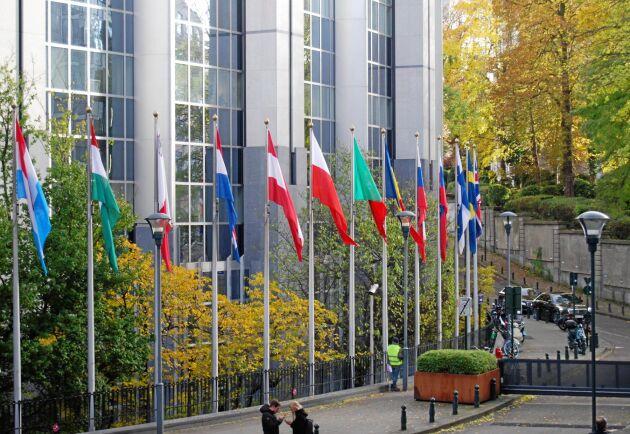 EU-parlamentet har pekat ut vilken riktning de vill se EU:s skogsstrategi gå. Bitvis åt motsatta håll.