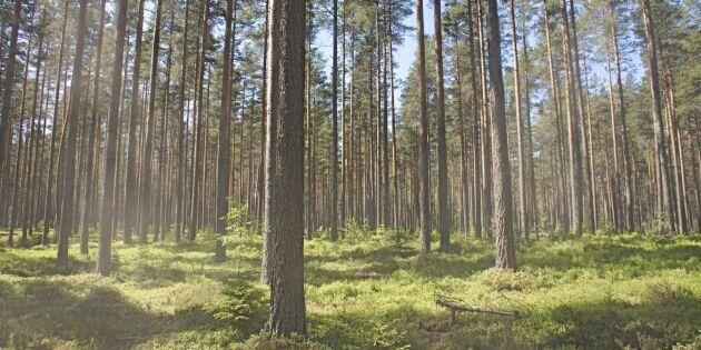 Kopparfors återuppväcks – ska förvalta 285 000 ha