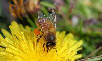 Kampanj mot syntetiska växtskyddsmedel godkänd