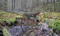 Skogssällskapet anslår 15 miljoner till forskning
