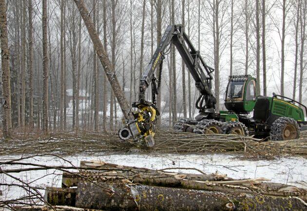 Tillväxttillskott. Hybridasp växer bra och kan vara ett sätt att öka produktionen i skogen. På bilden slutavverkning av ett 27-årigt bestånd i Värmland.
