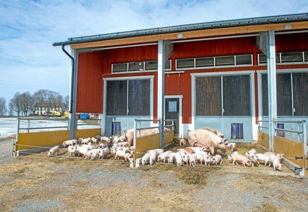 Enligt kontrollföretagen har gården i Uppdrag gransknings reportage en generellt väl fungerande djurhållning, skriver Kravs VD.