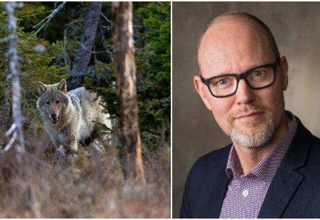 Marcus Öhman, chef för Viltförvaltningsenheten på Naturvårdsverket.