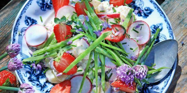 Färgglad sommarsallad med matjessill