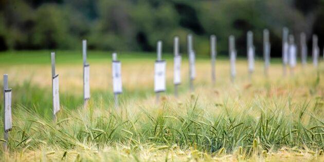 Satsar miljoner på framtida grödor
