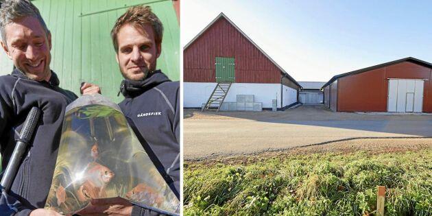 Johan och Mikaels företag Gårdsfisk satsar på fiskodling i lador