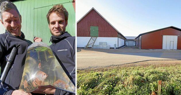 Entreprenörerna och pionjärerna Johan Ljungquist och Mikael Olenmark Dessalles på Gårdsfisk i skånska Tollarp.