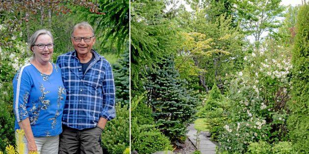 Bildextra: Här är trädgården som sätter barren främst