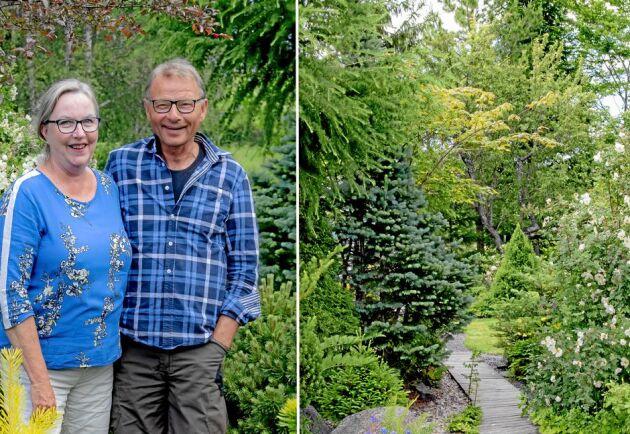 Margareta Rutqvist och Bosse Strandgren omgivna av barrväxter i sin trädgård i Täfteå.
