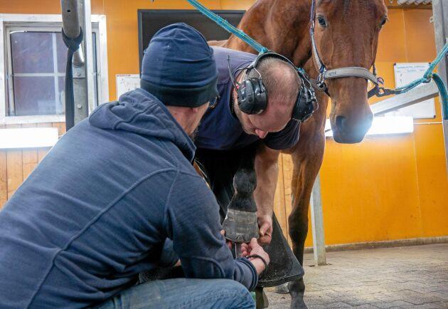 Studenterna får jobba med travhästar och islandshästar som står uppstallade på Wången, men de tar också emot utomstående som behöver skos.