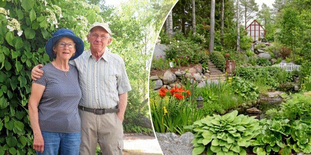 """De laddar för årets Öppen trädgård – besök """"Lilla Madeira"""" i Lövånger"""