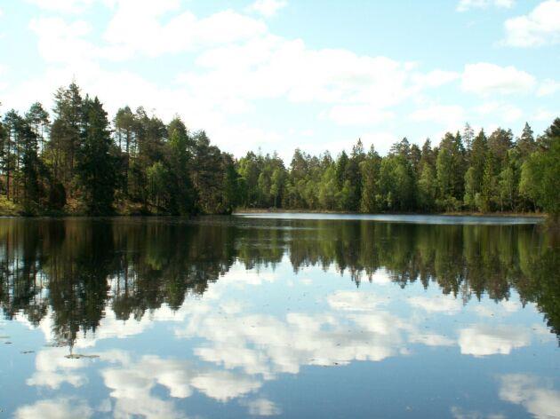 Enligt en rapport från Skogforsk är svenskt skogen ett viktigt verktyg för ett förbättrat klimat. Knepet - att den brukas.