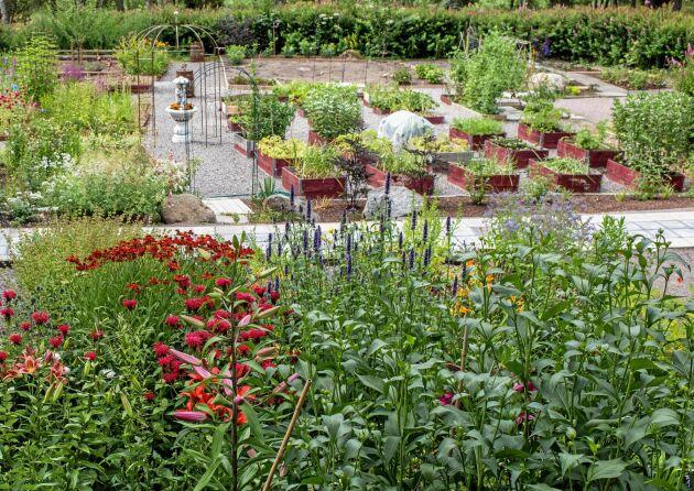Den röda blomman till vänster är en temynta, de mörkröda är trädgårdssolbrud och den blå är anisisop.