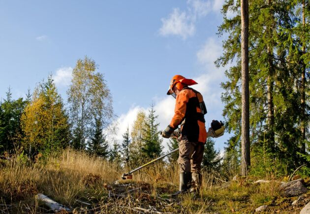 Allt fler personer utanför EU jobbar i svenska jordbruks- och skogsföretag, visar nya siffror från Migrationsverket. Störst är ökningen inom skogsarbete. Arkivbild