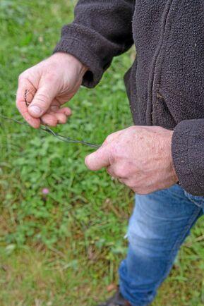Staketen får lagas i stort sett varje dag under hösten när kronhjortarna kommer fram till gårdarna för att söka föda.