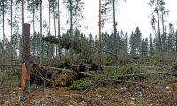 Många dubbelt drabbade av stormen Laura