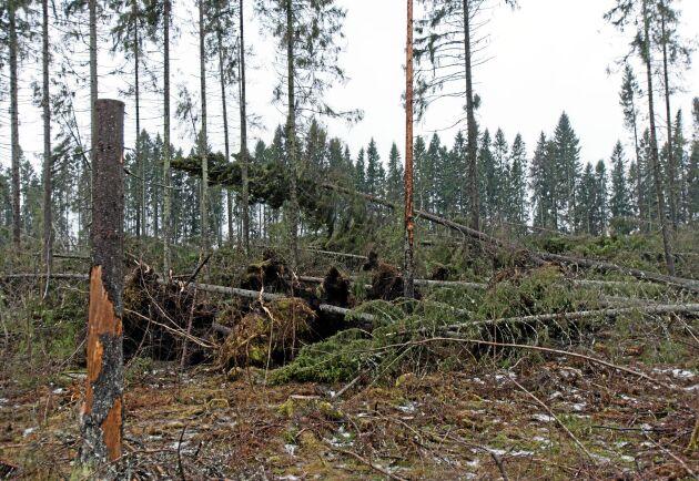 Stormskadad skog. Arkivbild.