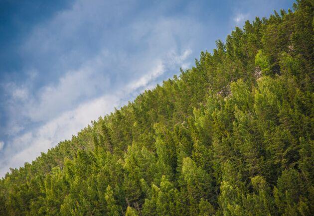 Nya skogsägare är oftare kvinnor och har högre utbildning.