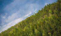 Kan man överta skogskonton?
