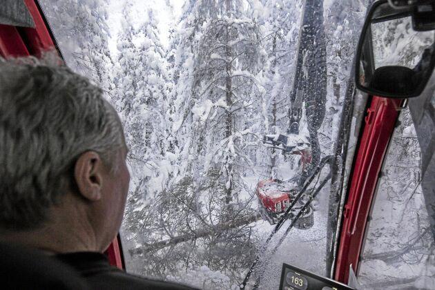 Rekordsnön i år gör det lite svårare att se hur träden ser ut.