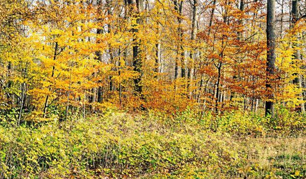 Mittlandsskogen på Öland anses vara Nordeuropas största sammanhängande lövskogsområde nedanför fjällkedjan. Skogen har en rik fauna och flora.