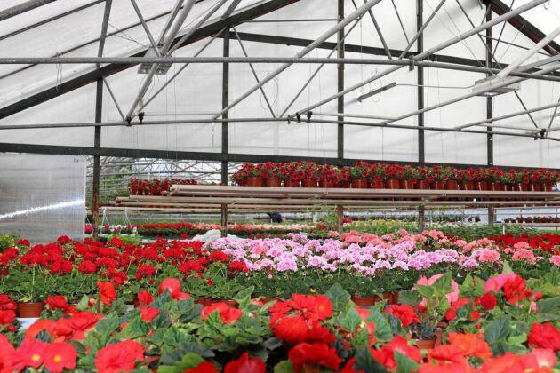 Växthuset är ett Forkesta Eskilstuna om 480 kvadratmeter.