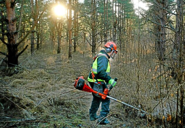 Med en rad jämställdhetsinitiativ vill Skogsnolia bana väg för fler kvinnor i skogsbranschen.