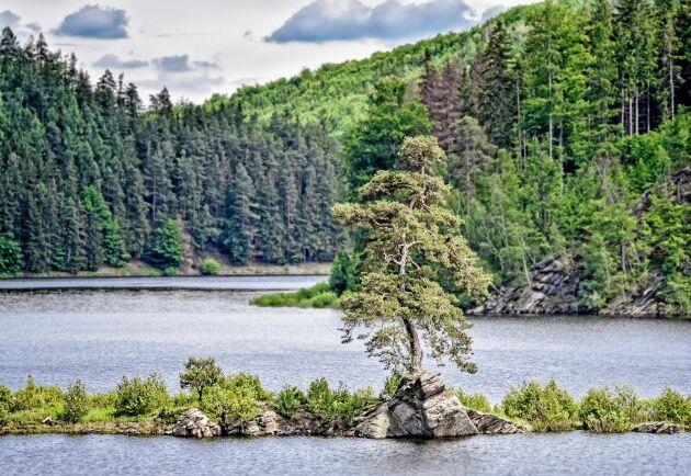 En 350-årig tall i tjeckiska Chudobín har utnämnts till årets träd i Europa 2020.