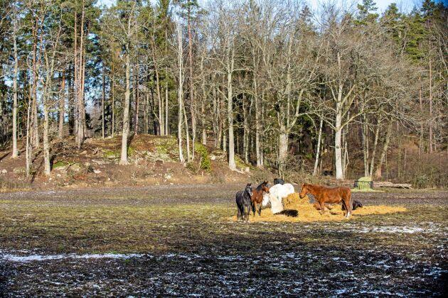 För att minska trycket på de fasta foderstationerna finns det också enkla och flyttbara foderhäckar som används när marken bär att köra på. Genom att flytta runt dem i hagarna stimuleras hästarna till rörelse.