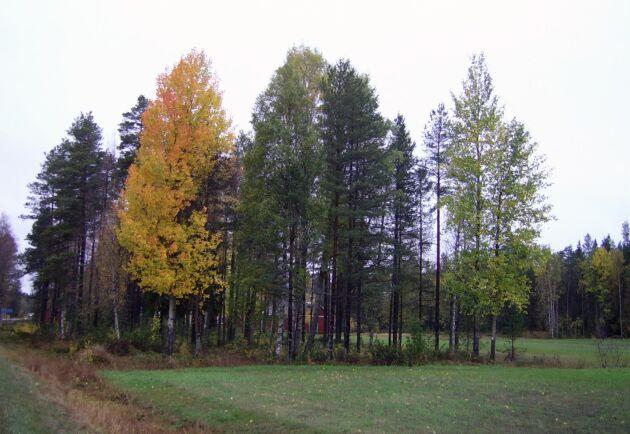 Träd och andra växter med lång livslängd har förmågan att växla mellan perioder av tillväxt och vila. I nordiskt klimat är detta är en strategi för att överleva den kalla vintern.
