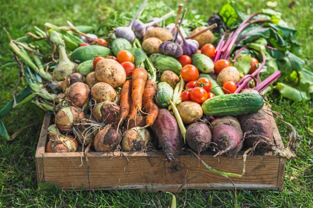 Härliga grönsaker av bästa kvalitet.