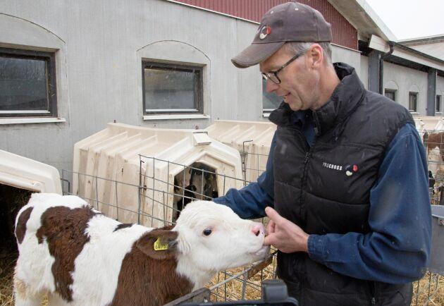 På mjölkgården finns idag 350 mjölkkor samt kvigor och kalvar. Tjurarna säljs som tremånaders kalvar. Totalt finns det cirka 750 djur på gården, berättar Jan Eriksson.
