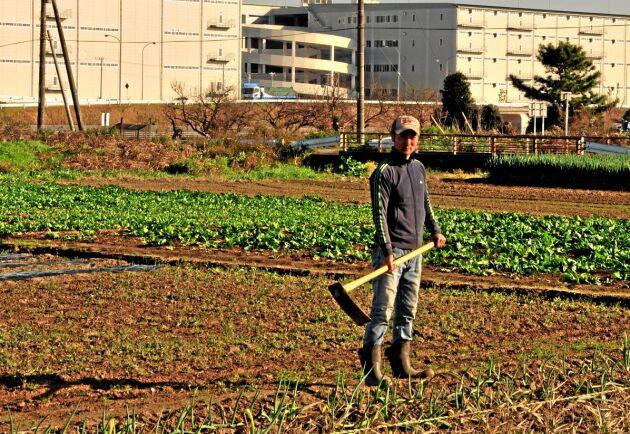 Från början sålde Setsuo Nakagoshi grönsakerna via det lokala bondekooperativet men övergick sedan till en abonnemangsbaserad affärsmodell.