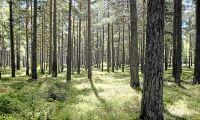 Här sjunker skogspriserna