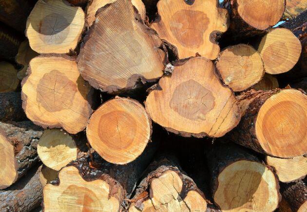 Ytor av trä har antibakteriella egenskaper, och allra bäst är kärnfuru.