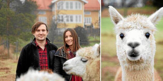Andreas och Therese älskar livet på sin gård Kullholen