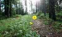 Negativ trend för miljötillståndet i skogen