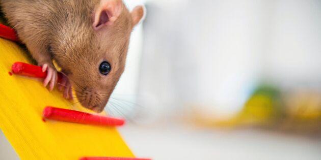 SLU vill starta nytt djurförsökscenter