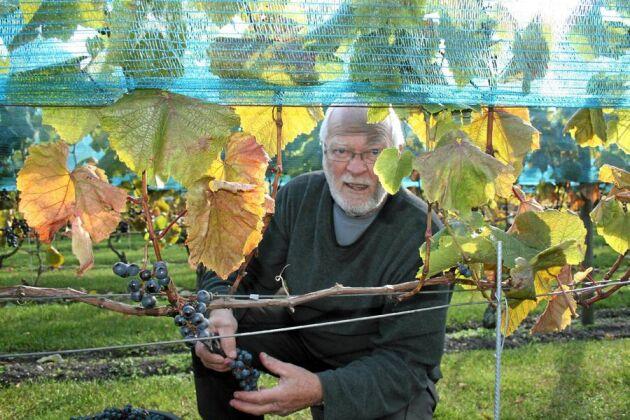 Vinodling är ingen snabb fix: - Vi planterade våra första stockar 2003. Man får räkna med att det dröjer fyra år innan full skörd, säger Claes Olsson.