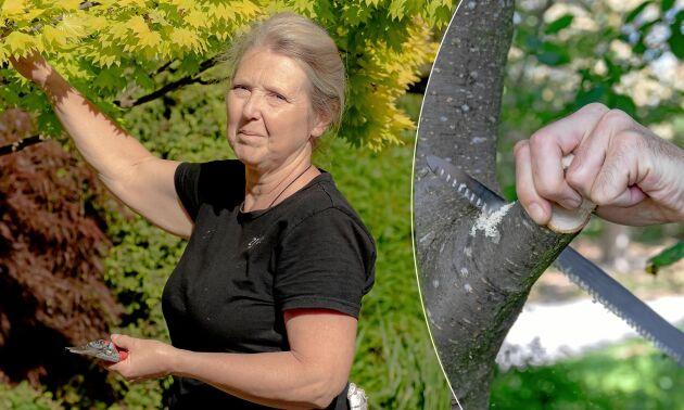 Pia Lundgren är utbildad trädgårdsingenjör och har informerat om trädgård i många år.