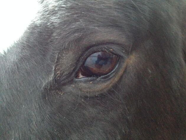 Hästen ser betydligt bättre i mörker än vi gärna tror. Däremot uppfattar den inte röda färger.