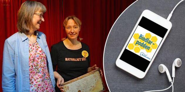 Digitalt surr – ny podd om bin och biodling!