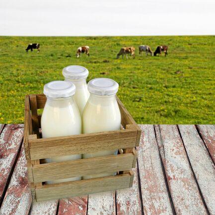 Mjölkgårdsturism kan bli framtiden i Sverige, menar Svenska Dryckesakademin.