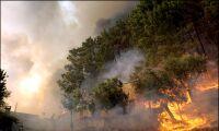 Algarve-stad hotas av skogsbrand