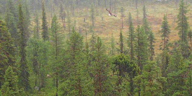 Skog för 200 miljoner säljs – blir naturreservat