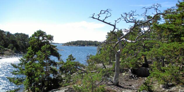 Ny nationalpark planeras i Stockholms skärgård