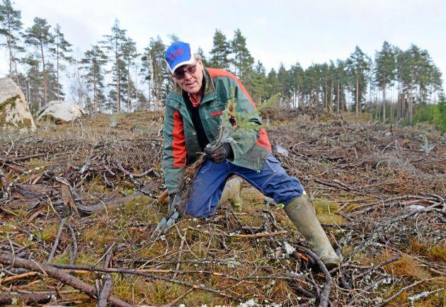 Anders Karlsson hittar nyuppdragna granplantor varje dag.