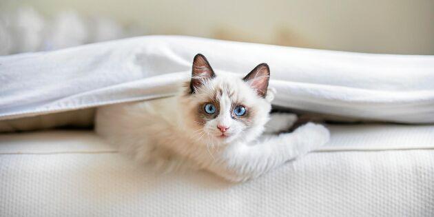 Husdjurens hemliga liv: Det gör katten när du inte är hemma