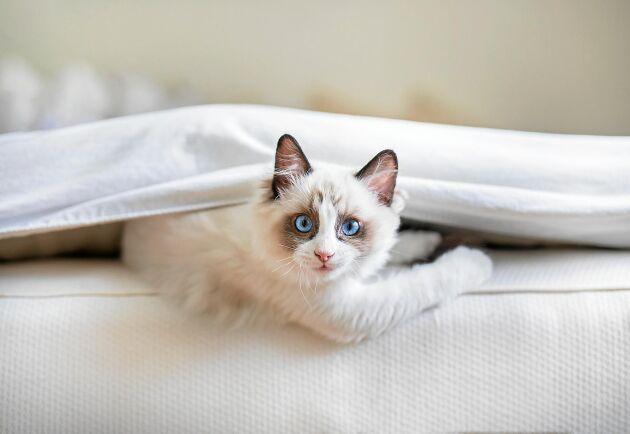 Du stänger ytterdörren efter dig och katten gör som katten vill.