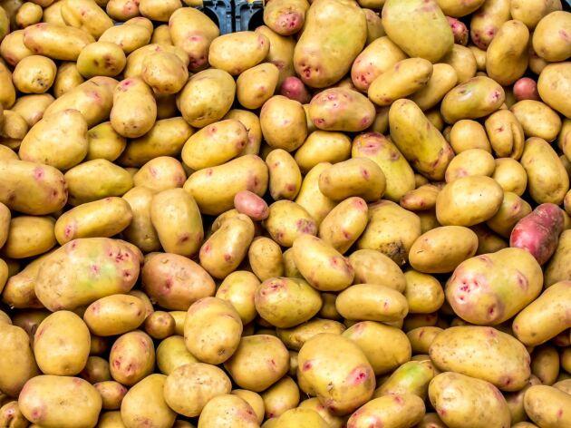 Potatis tillhör den ekoskörd som ökat allra mest förra året.